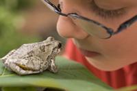 Boy looking at a frog