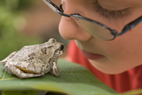 Child looking at a frog on a leaf