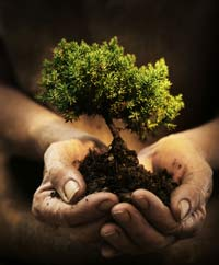 Hands holding a small tree in soil