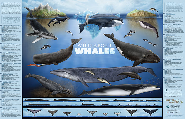 Wild about Whales Poster English