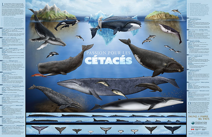 Wild about Whales FR Poster