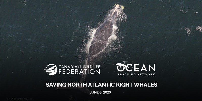 right whale webinar header