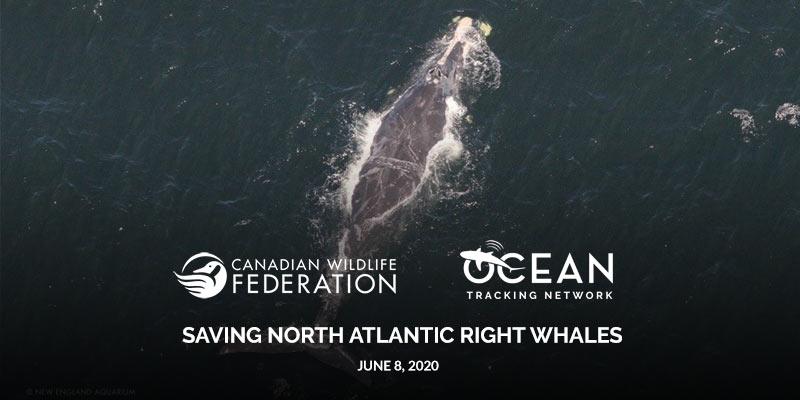 right whale webinar header