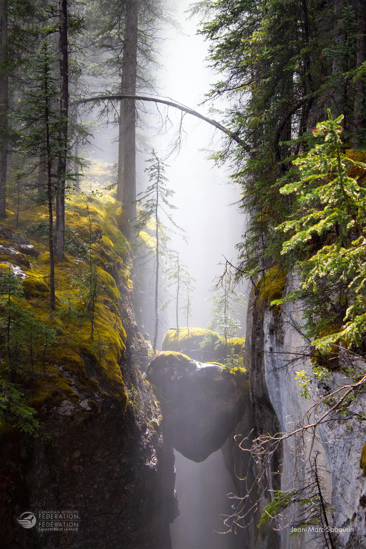 Canadian Landscapes | Winner