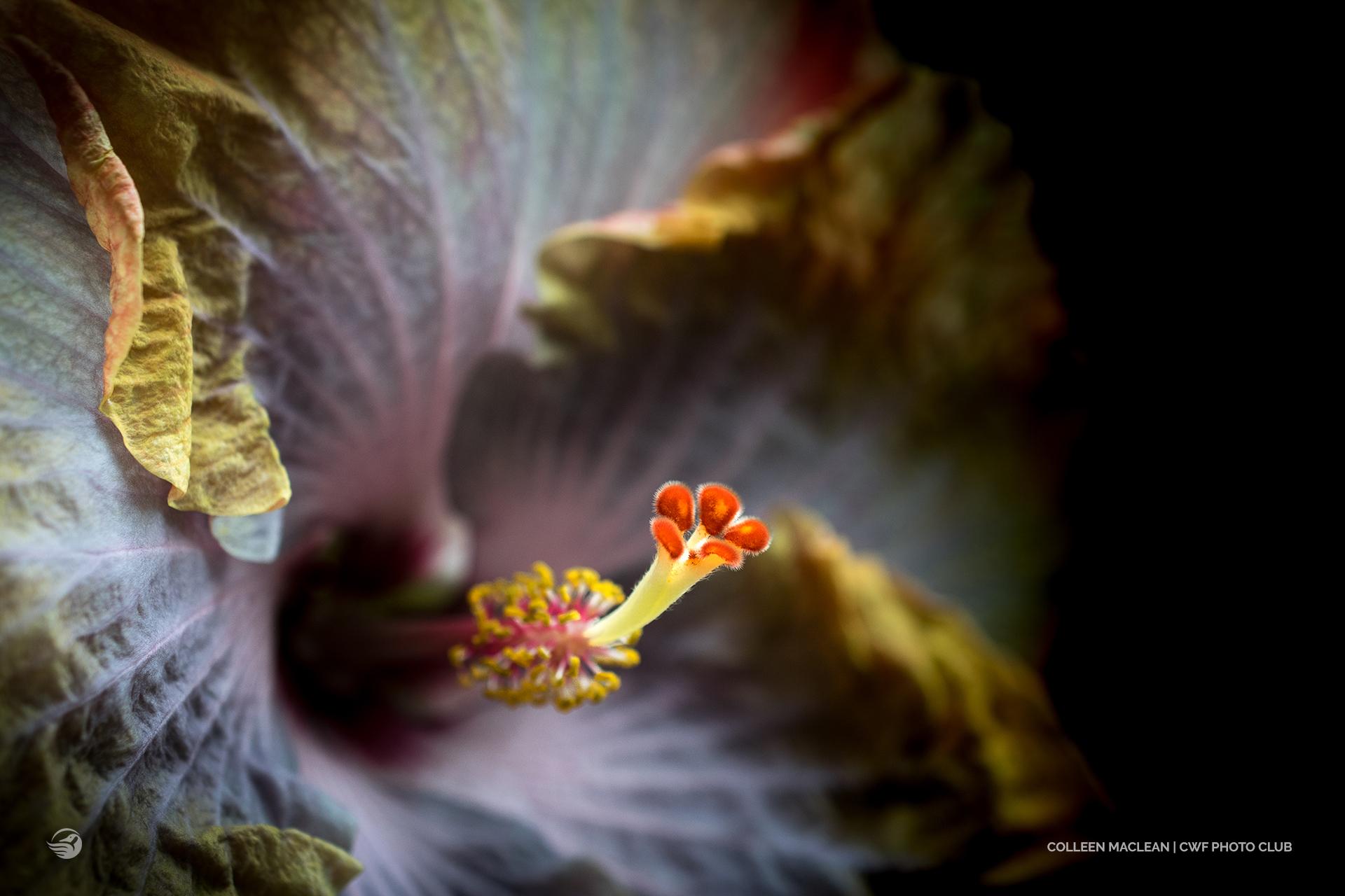 close up flower