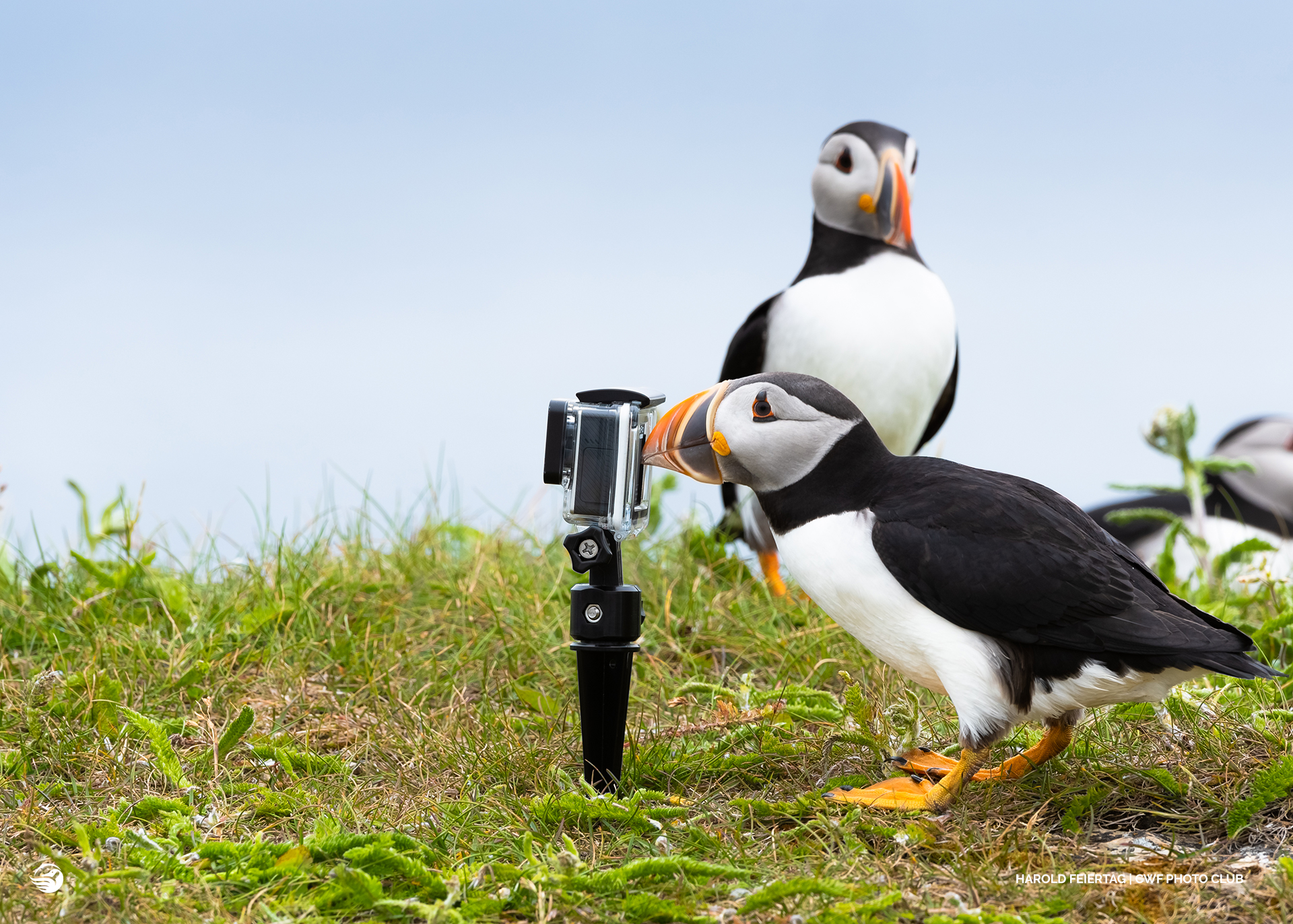 puffin with camera