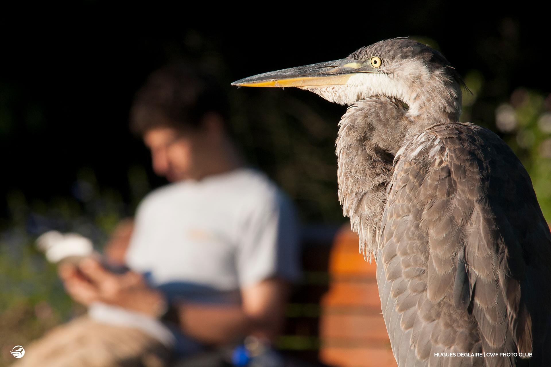 heron and man reading