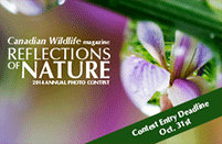 Reflections of nature contest logo