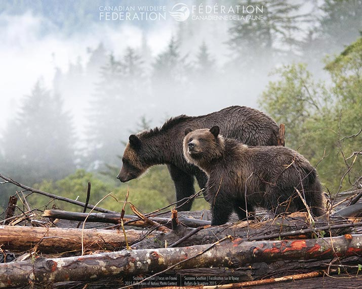 Two bears in a misty forest