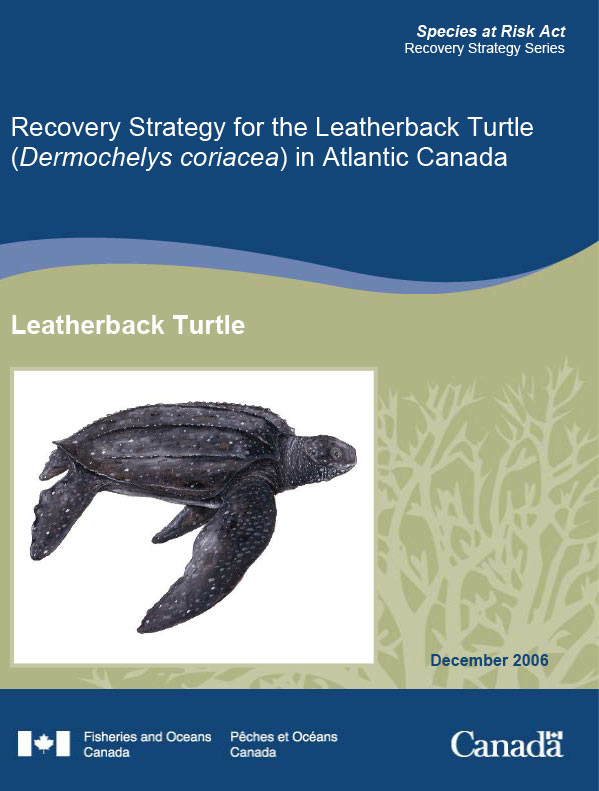 Leatherback turtle recovery plan poster