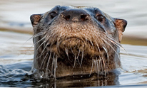 about us otter 206