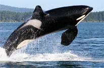marine program - orca