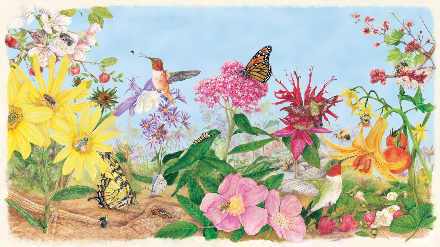 Illustration of flowers, insects and birds