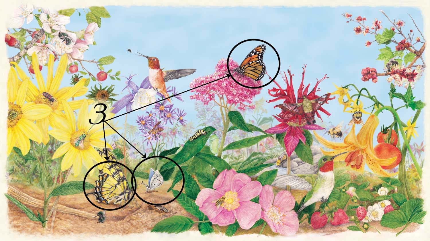 Pollinator poster with butterflies circled