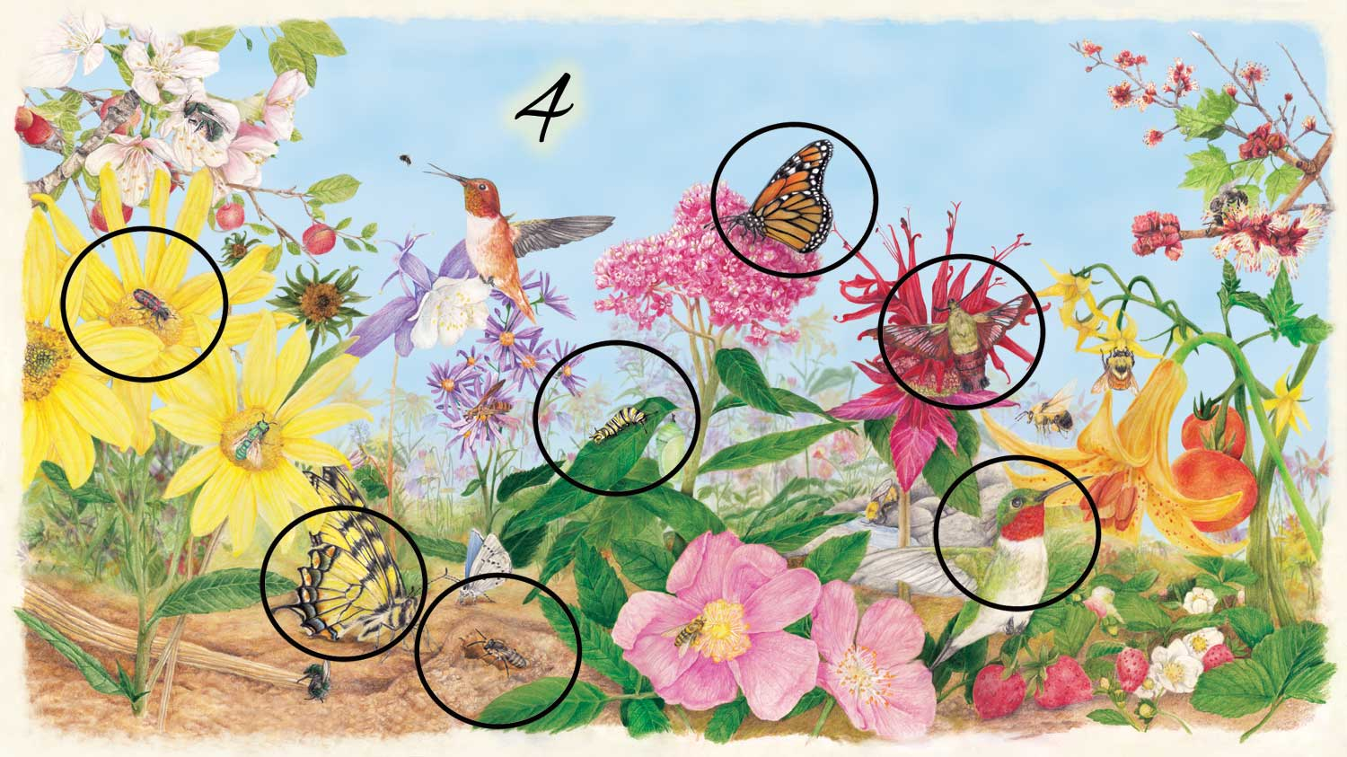 Pollinator poster Illustration with the 7 pollinators circled