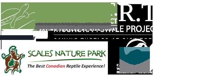 turtle start grouped logos