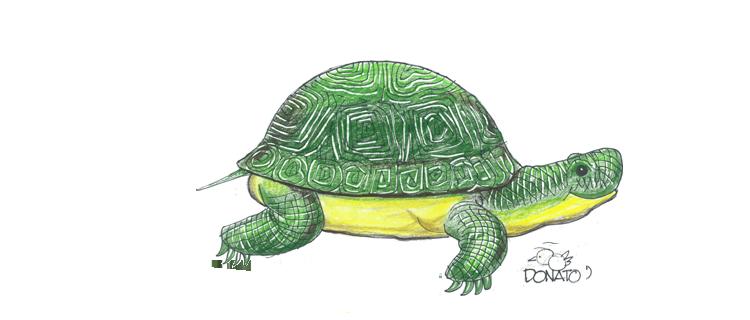 start header turtle adopt