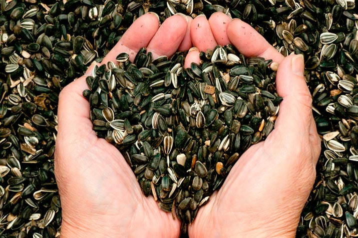 sunflower seeds heart shaped hands