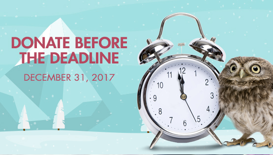 Donate before the December 31 2017 Deadline