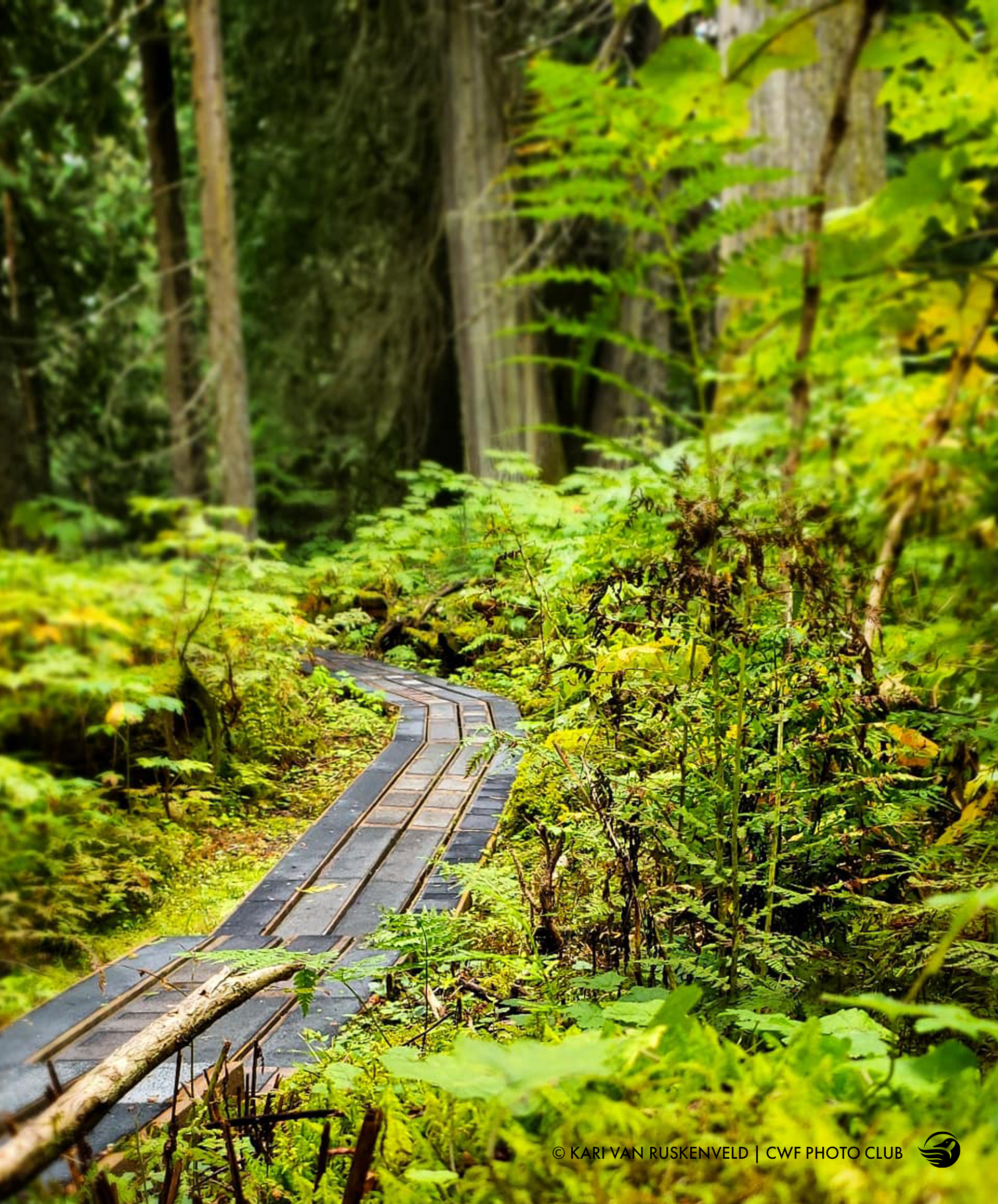trails in prince george