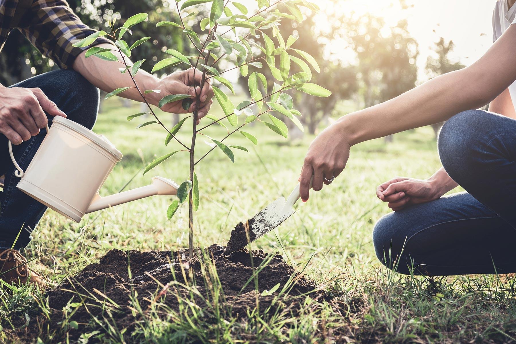 plant planting a tree hand
