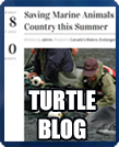 Turtle Blog button