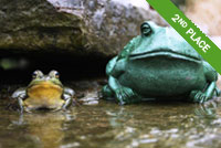 Frog in a pond Photo by Susan Enders