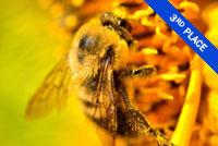 Bee on a flower Photo by Nathalie Duhaime
