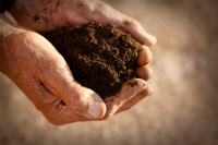 healthy soil grows healthy plants