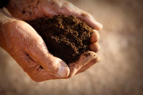 healthy soil grows healthy plants