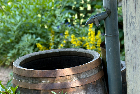 rain barrels are a great way to save water