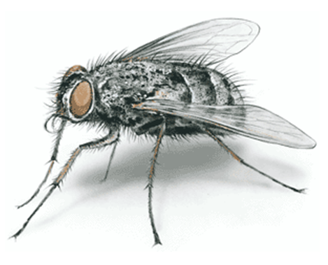 Canadian Wildlife Federation: Beneficial Insects