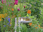 Gardens Galore 4