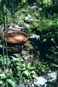 Small Garden 3