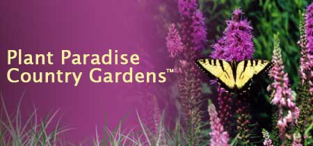 Plant Paradise Country Gardens Header