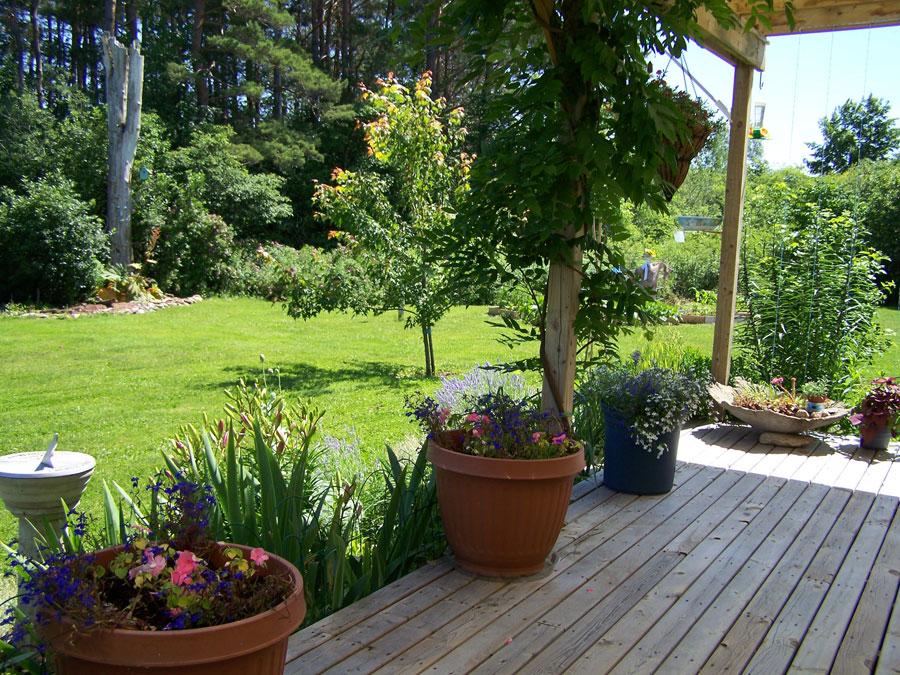 garden photos 7