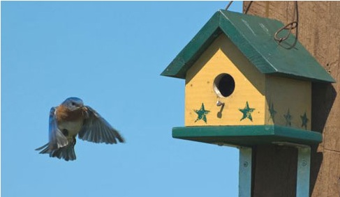is there a bluebird on your windowsill (header photo)