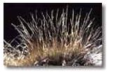 Ornamental Native Grasses (Grasses 3)