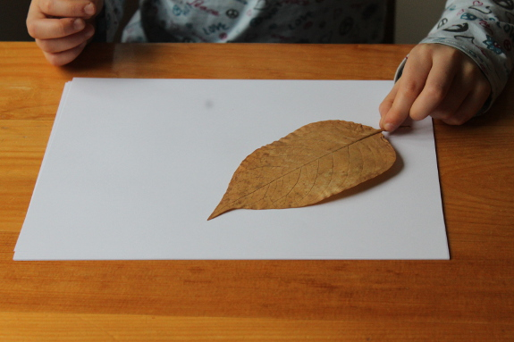 leaf rubbings 4 - 575px