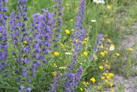 potential weeds