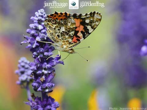 Butterfly computer wallpaper