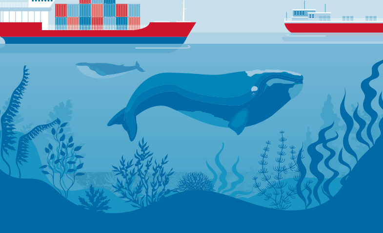 whale boat illustration