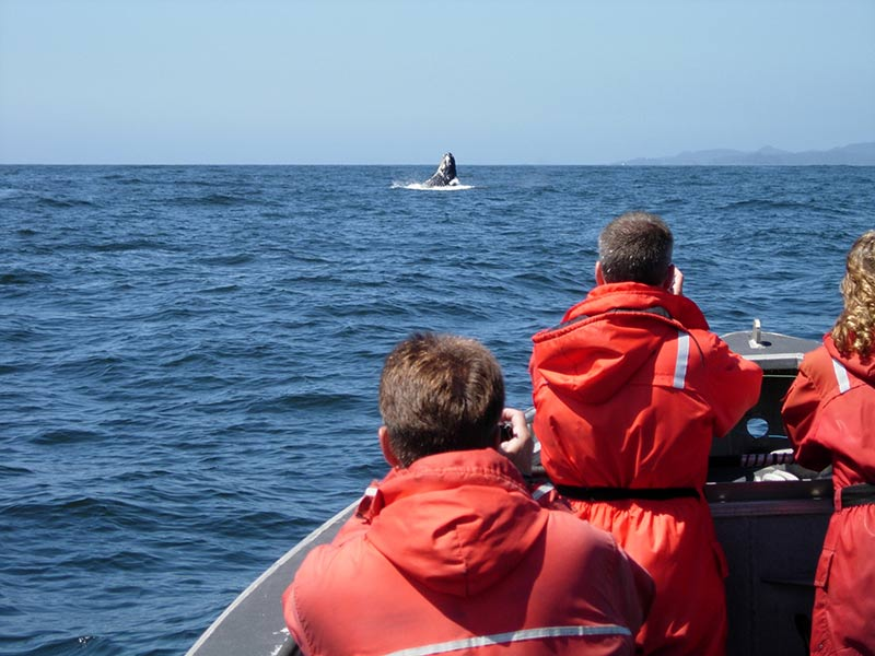 People in a boat watching whales breach