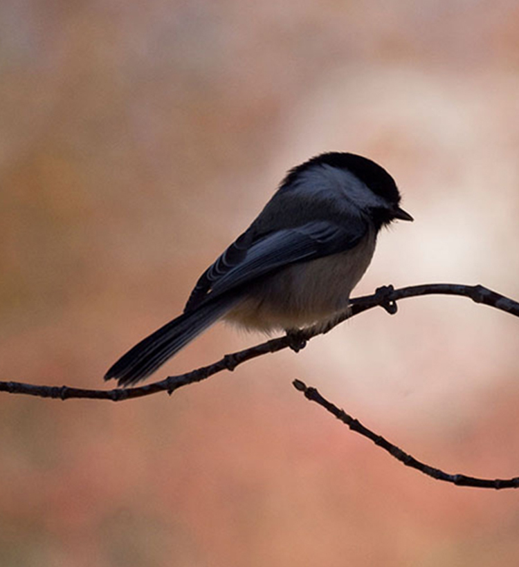 small bird on branch