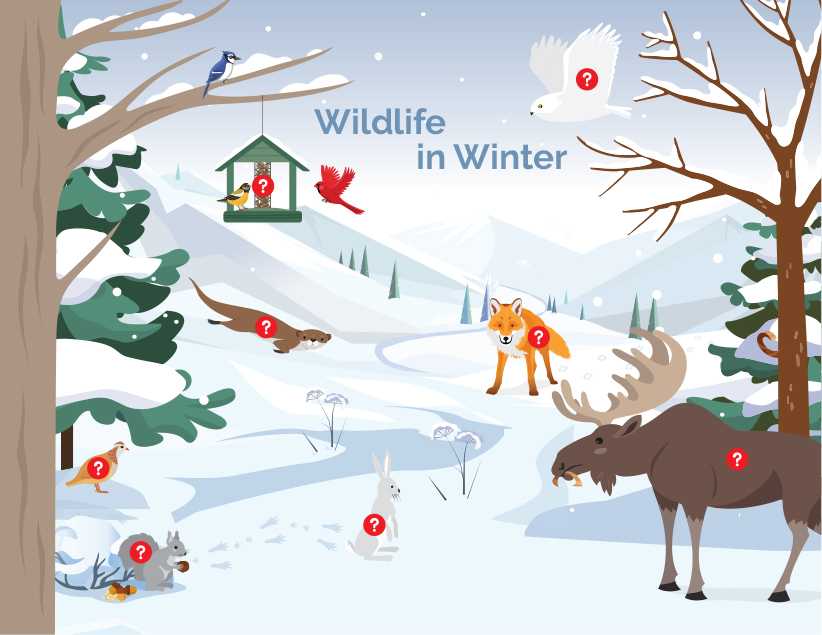 wildlife in winter