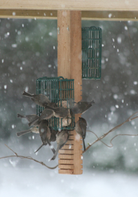 Birds at a feeder in winter
