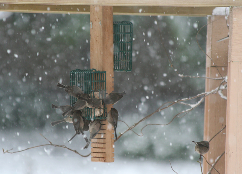 Birds eating at a feeder in winter