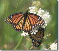 Monarch 200