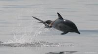 Porpoise and bird 200