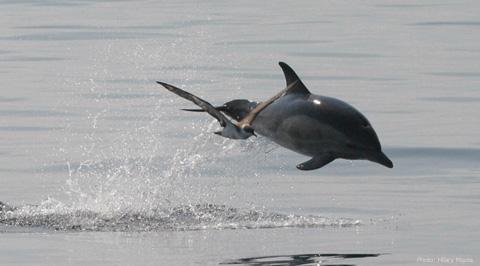 Porpoise and bird 480